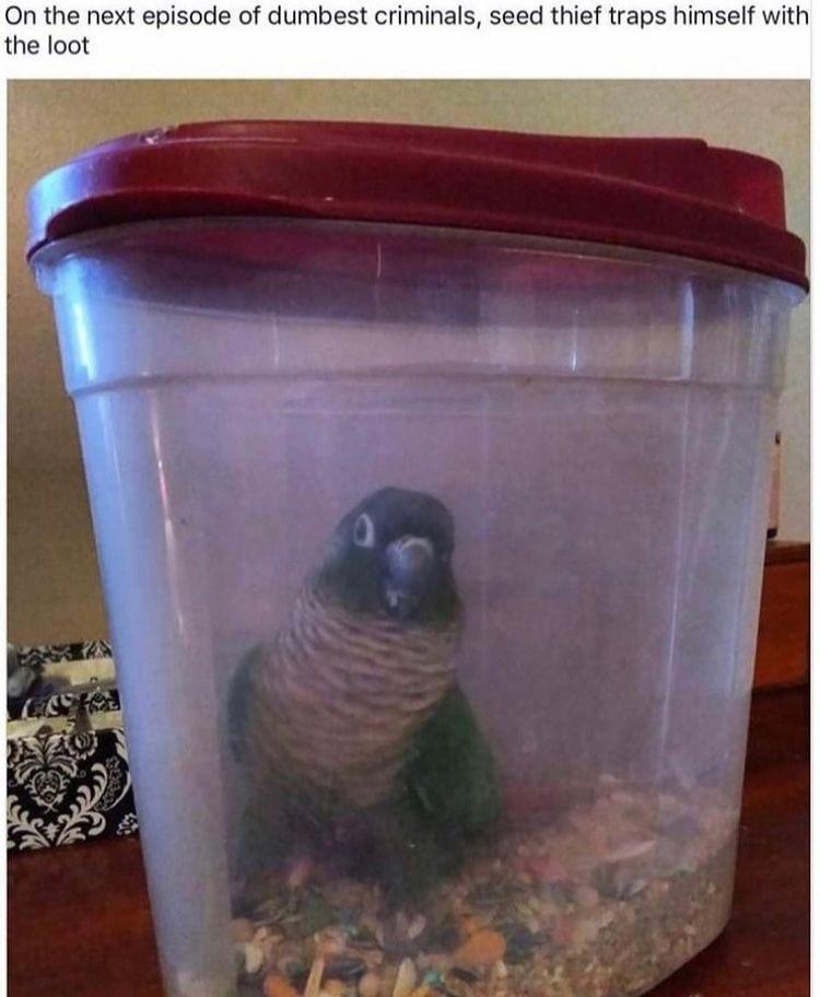 bird trap - meme