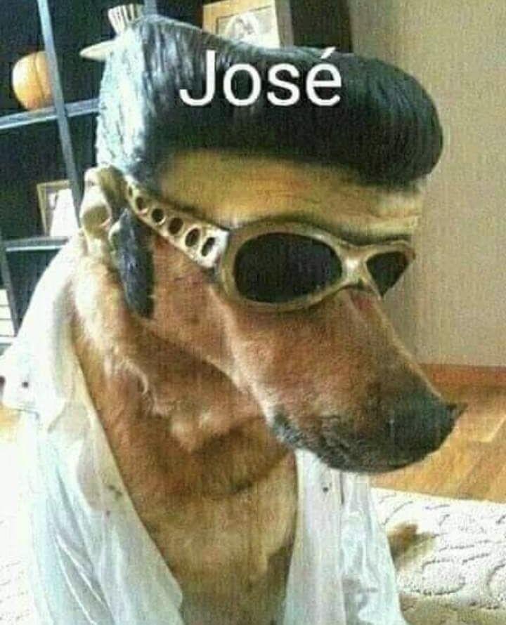 Perro facha - meme