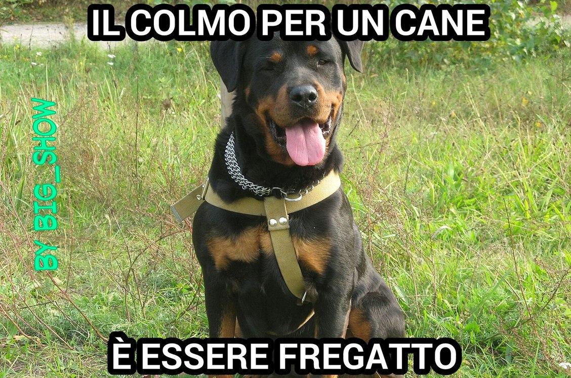 FreGATTO - meme