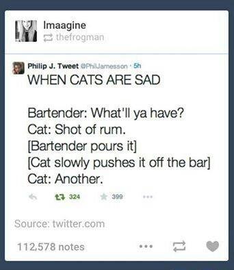 Fucking cats man....... - meme