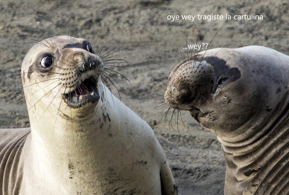 en ese momento la foca sintio el verdadero terror - meme