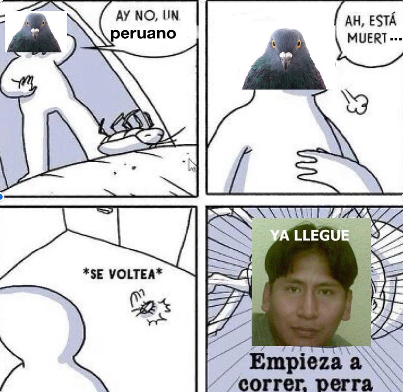 Perucucaracha - meme