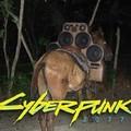 CyberMula