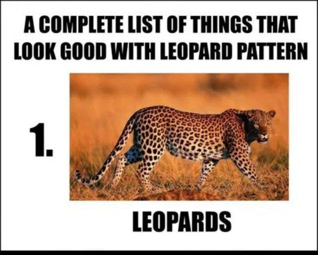 I Can Has Cheezburger Snow Leopards Funny Animals Online