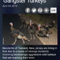 Goble gang