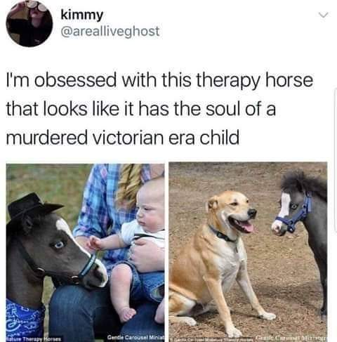 He kinda looks like Kid Bojack - meme