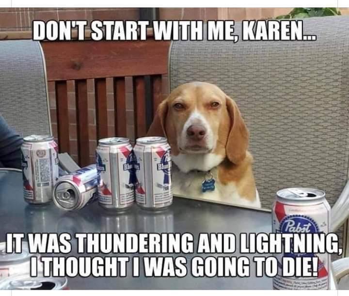 Drunk doggo - meme