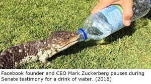 Zucc Drinking - meme