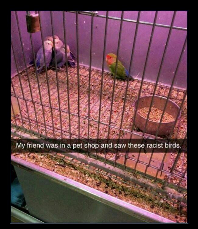 Racist birds - meme