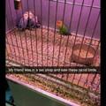 Racist birds