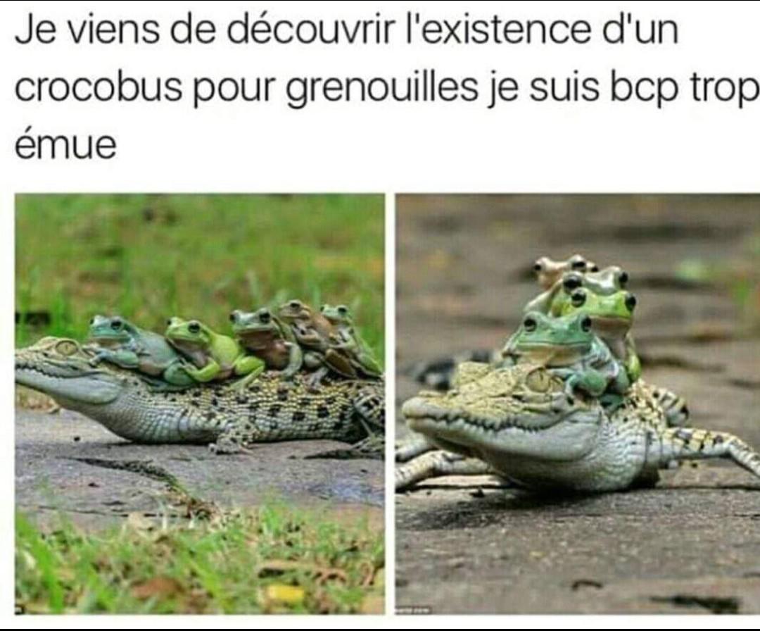 Crococar - meme