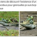 Crococar