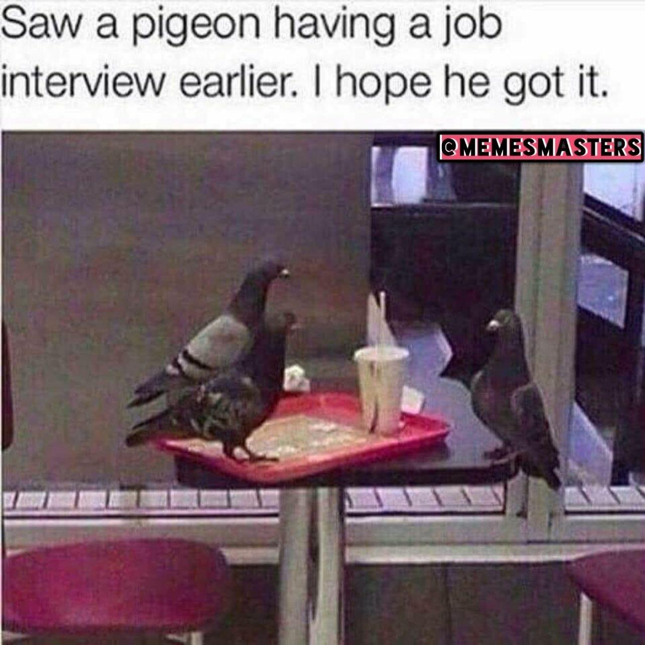 I need a job - meme