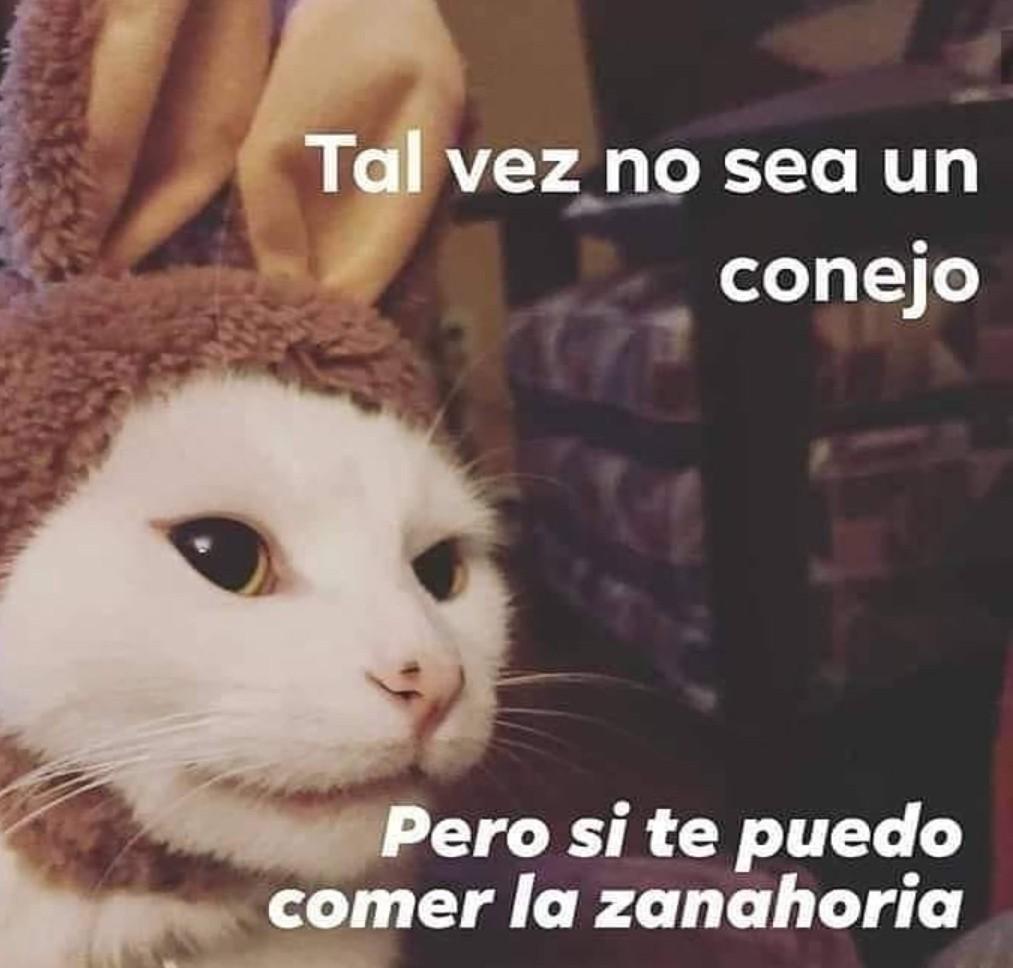 Conejo - meme