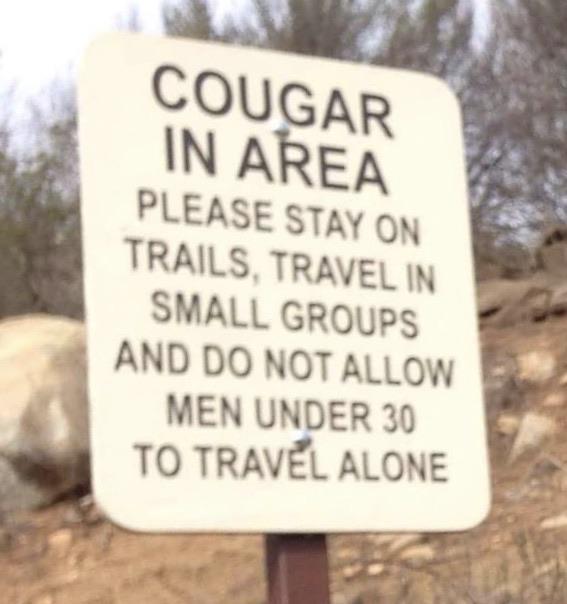 Cougar in area - meme
