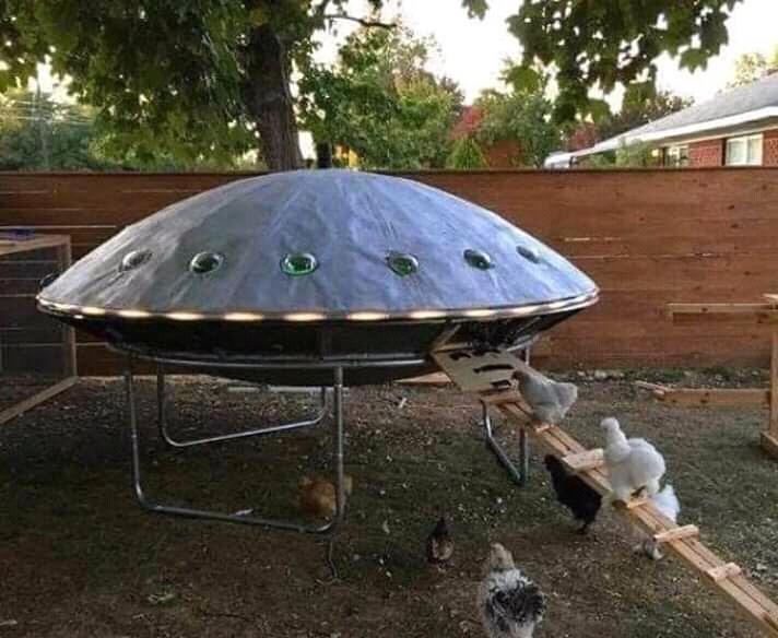 Sabía que las gallinas eran extraterrestres - meme