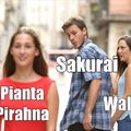 Le decisioni di Sakurai