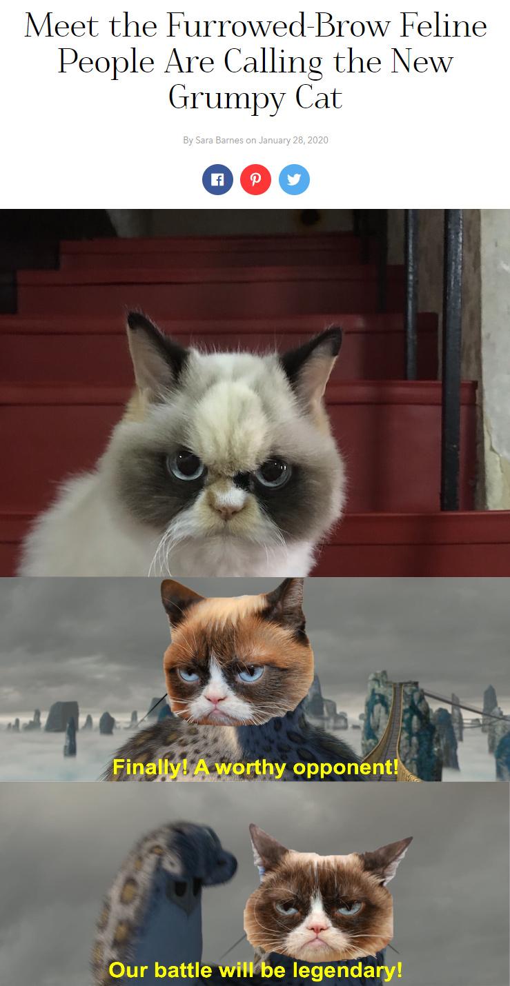 Grumpy Cat 2.0 - meme