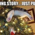 Ou you silly kitty