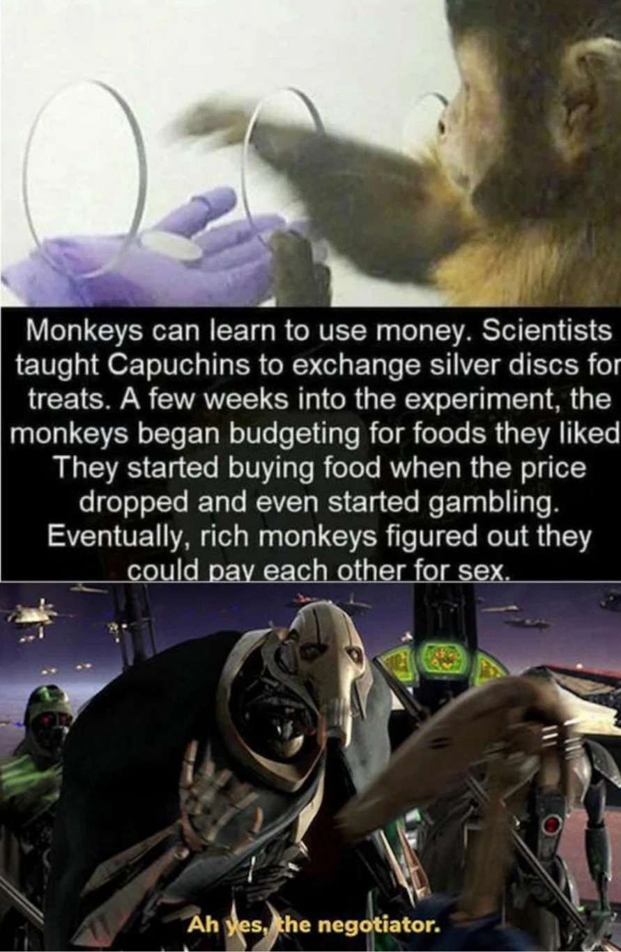 Monkey prostitutes - meme