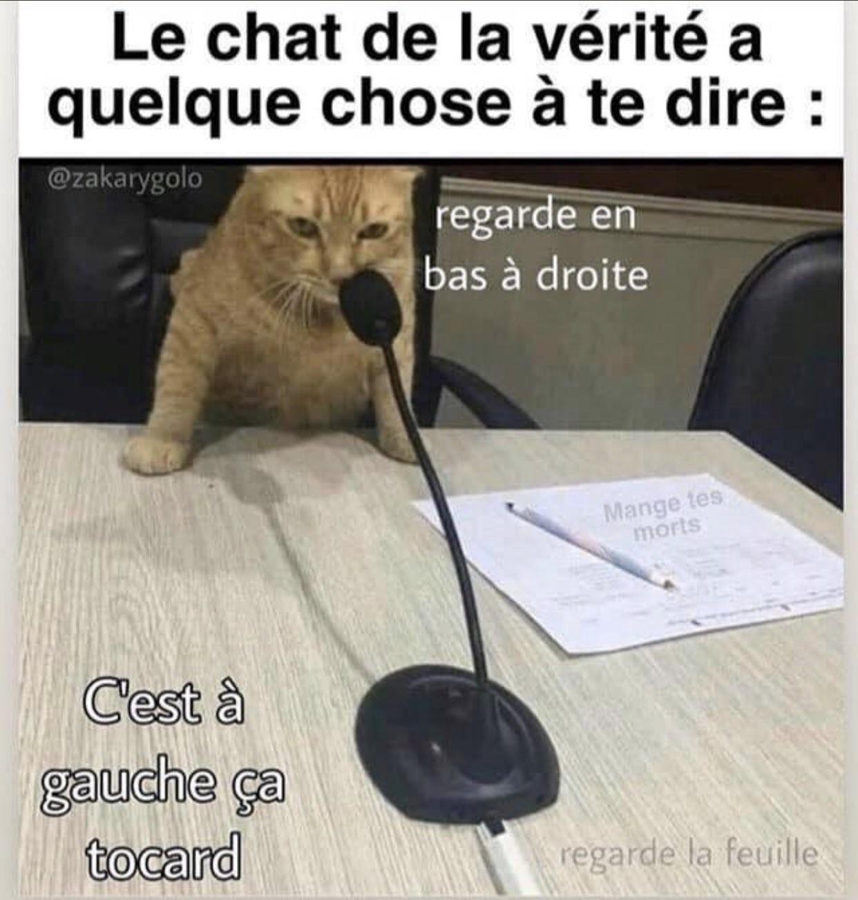 Le chat dit la vérité - meme