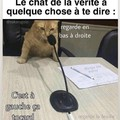 Le chat dit la vérité