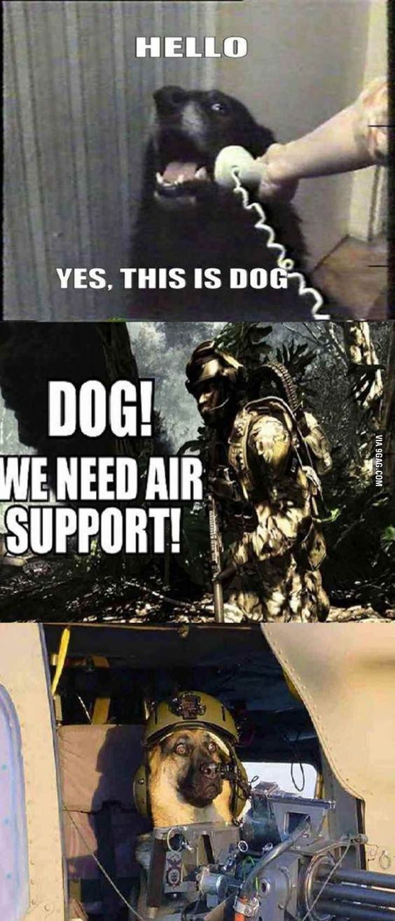 COD dogs be like - meme