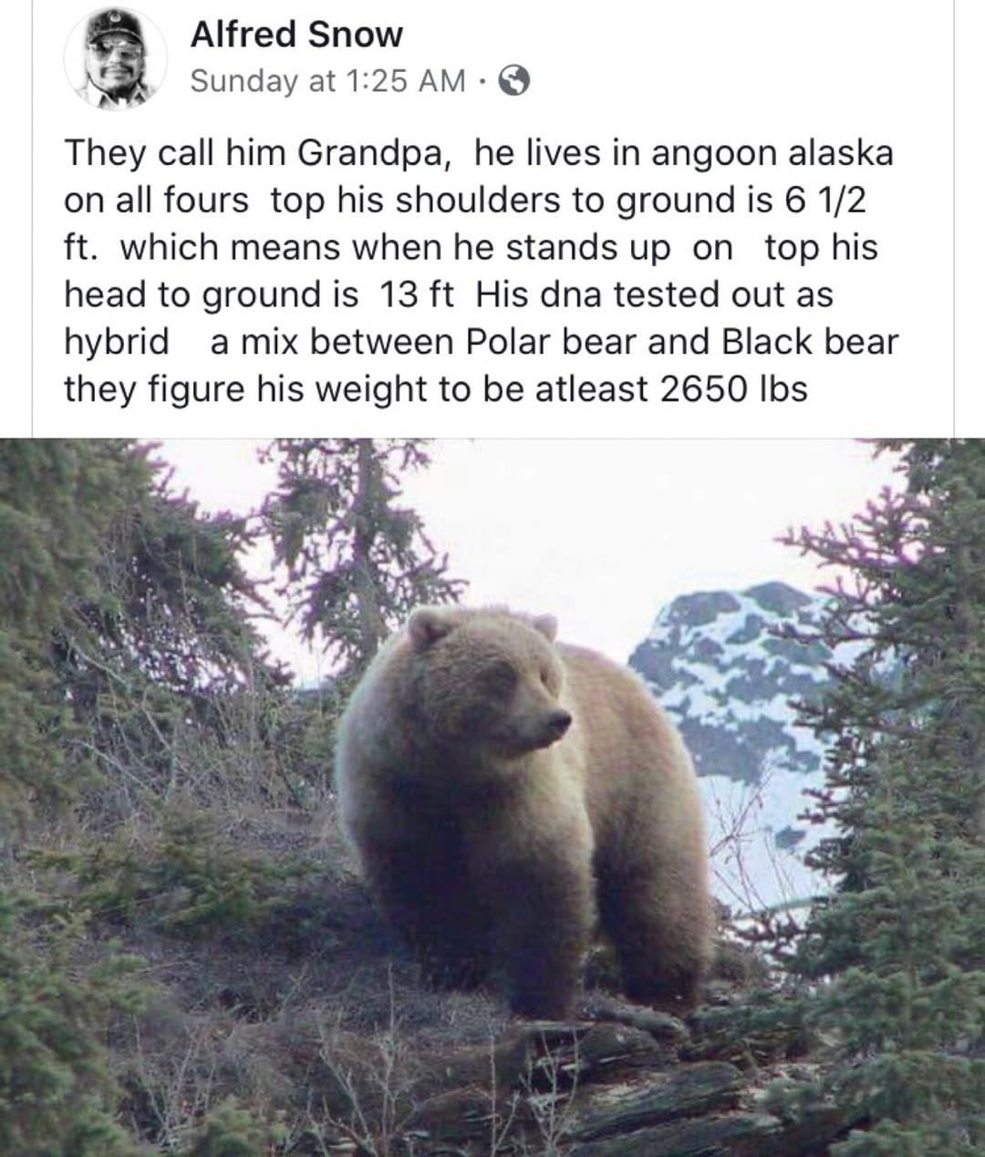 Grandpa bear - meme