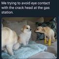 dog on crack