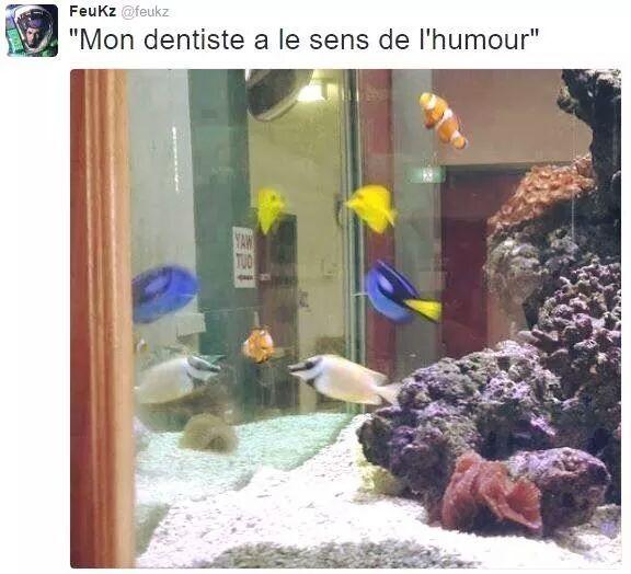 Nemo Doris - meme