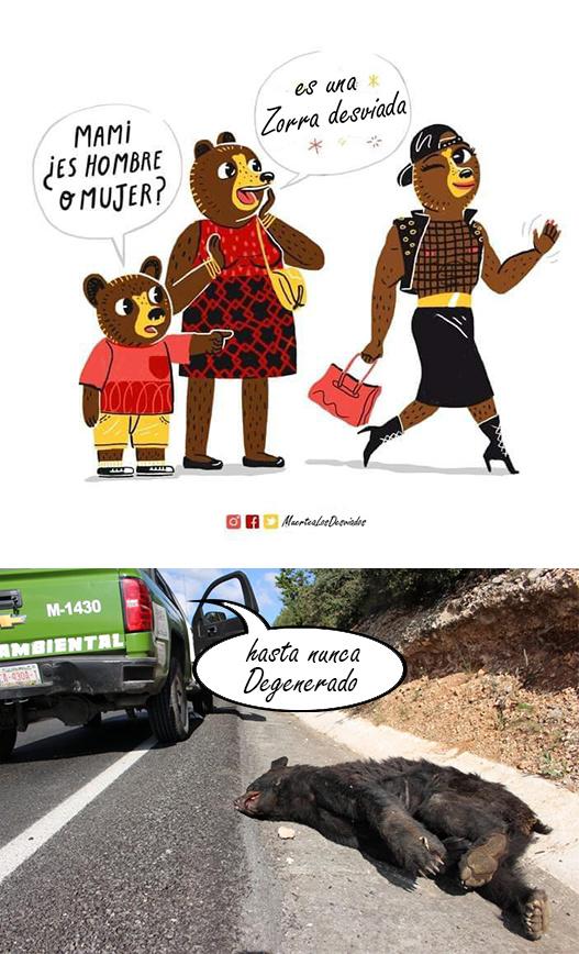 Grandes los osos . - meme