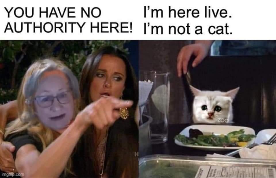 Jackie Wheeler & the cat - meme