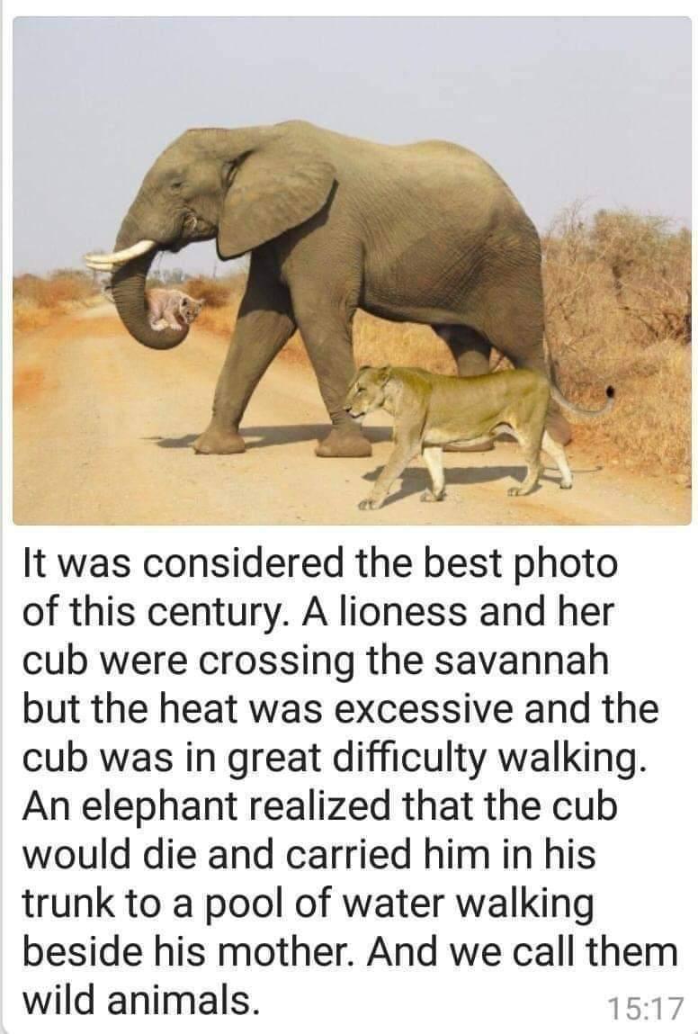 Animal odd couples - meme