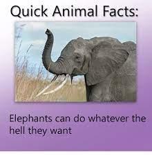 quick animal facts - meme