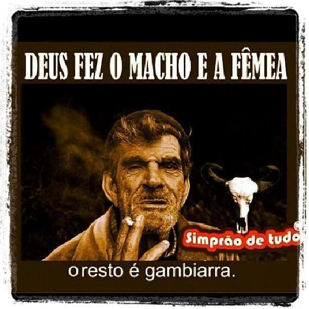 Macho femea - meme