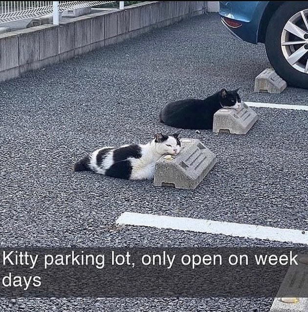pussy parking - meme