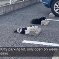 pussy parking
