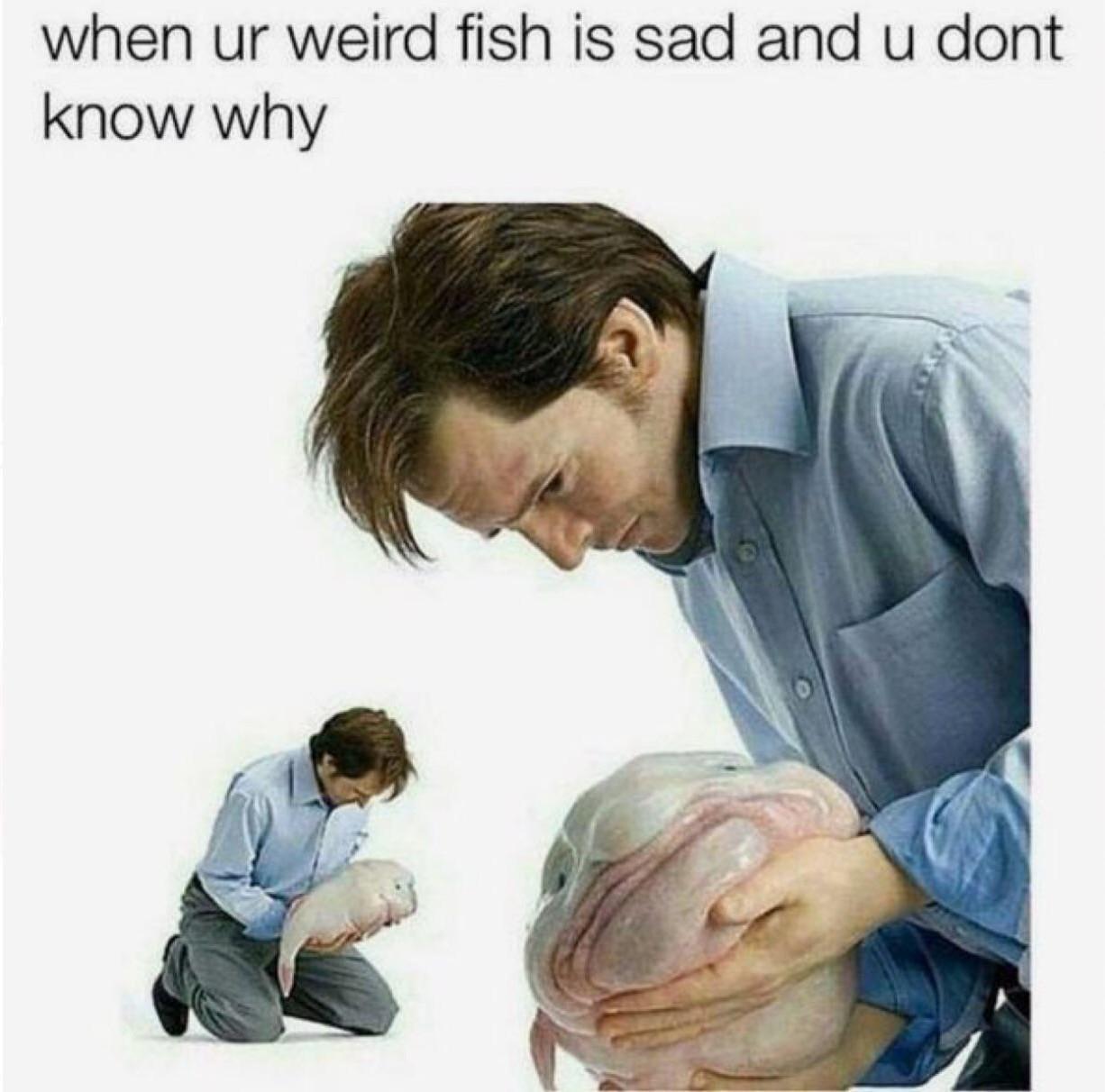 Trad: Quand ton Blooby est triste mais que tu ne sais pas pourquoi - meme