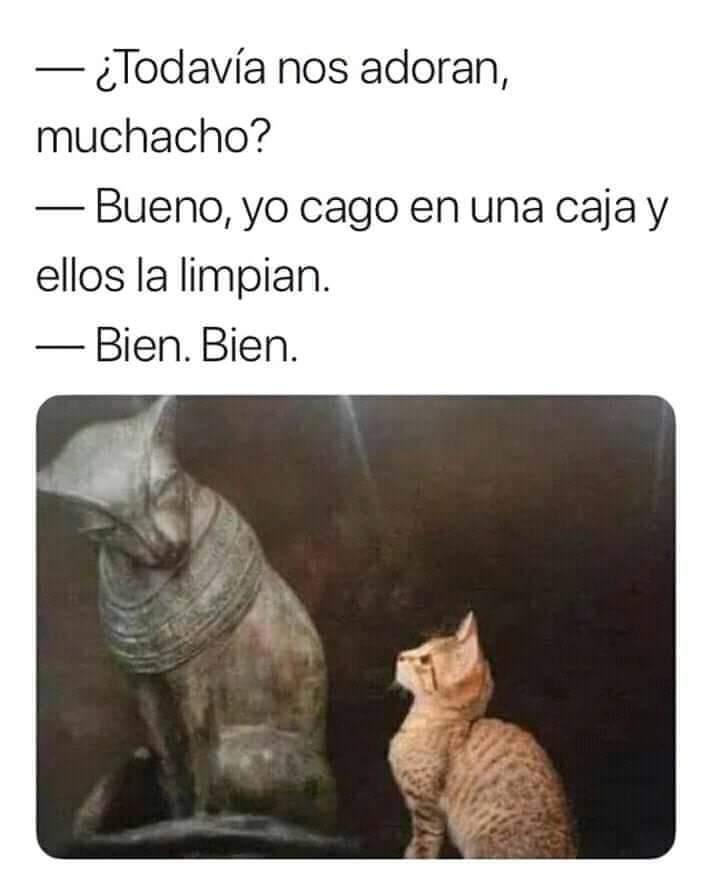 Ñ. Ñ - meme
