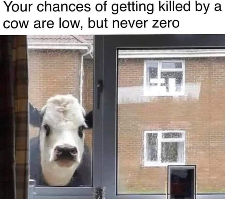 ominous cow - meme