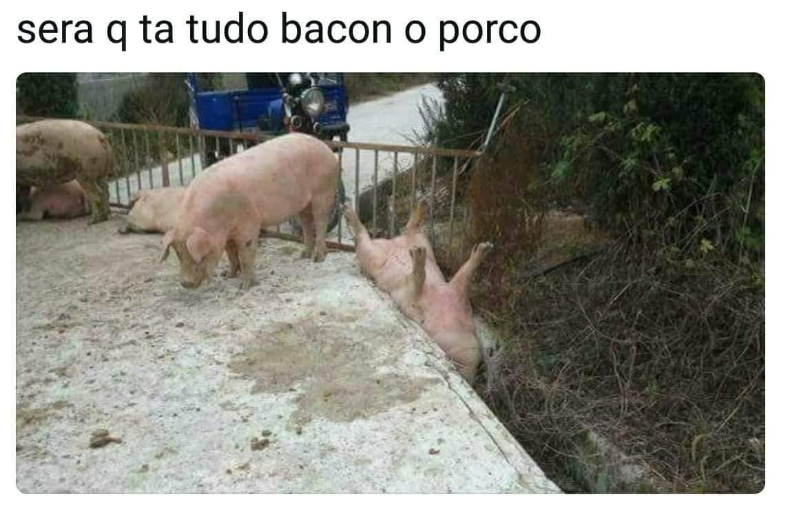 O título foi ver se o porco tá bem - meme
