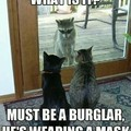 Cats think the racoon is wearing a mask