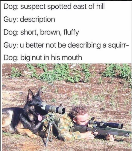 Doggo does a spotto - meme