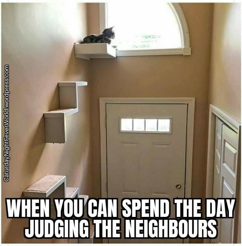 judging cat - meme
