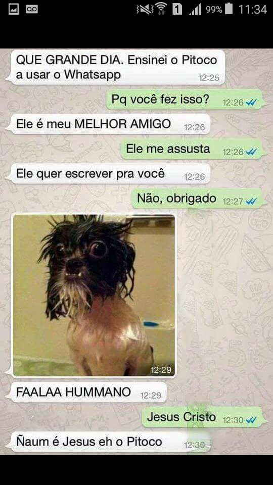 Pitoco - meme