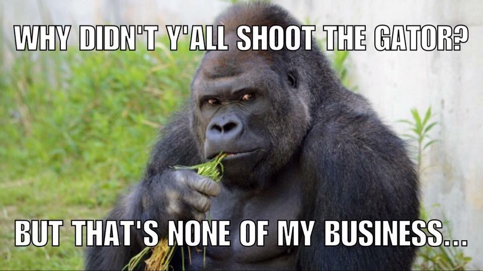 salty gorilla - meme