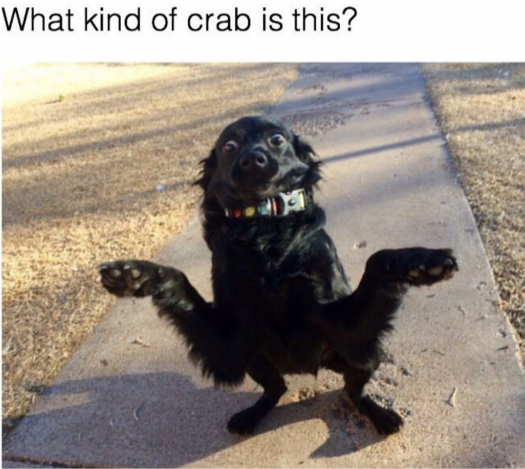 Doggo crab
