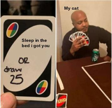 cats are stubborn - meme