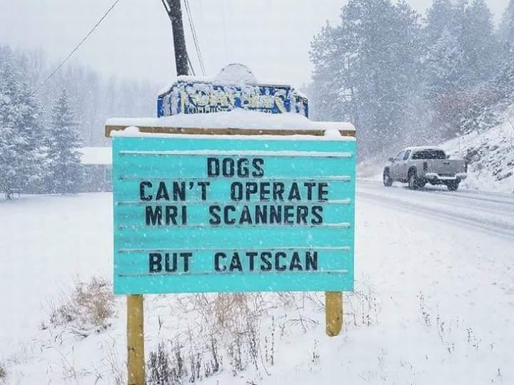 Catscan - meme