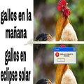 Eclise c:
